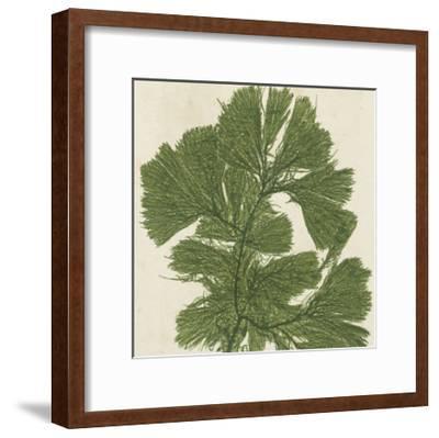 Brilliant Seaweed IV--Framed Art Print