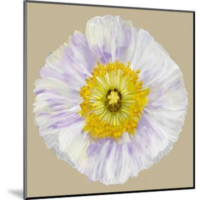 Poppy Blossom IV-Alicia Ludwig-Mounted Art Print
