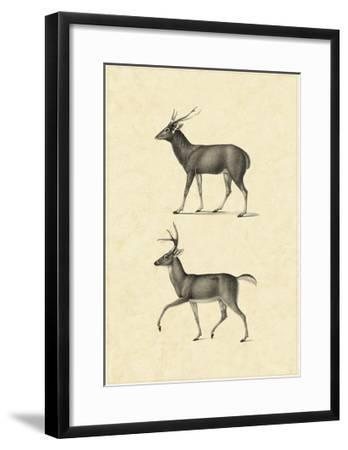 Vintage Deer II-Vision Studio-Framed Art Print