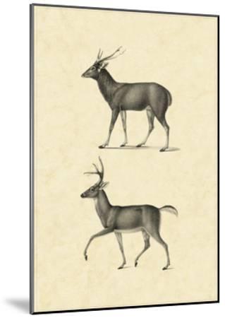Vintage Deer II-Vision Studio-Mounted Art Print