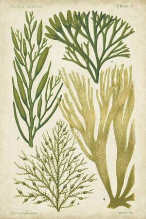 Seaweed Specimen in Green III-Vision Studio-Art Print