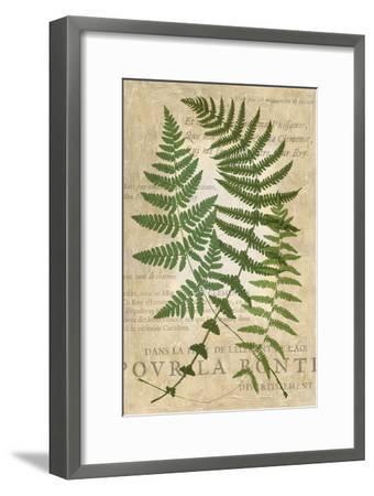 Fern Folio I-Vision Studio-Framed Art Print
