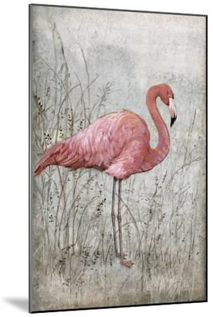 American Flamingo I-Tim O'toole-Mounted Art Print