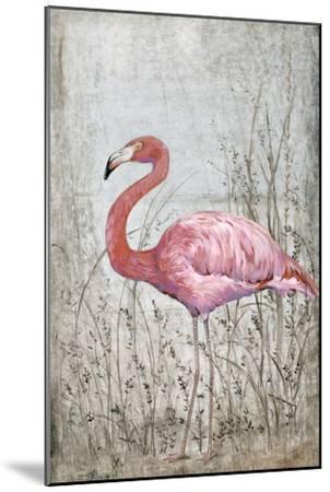 American Flamingo II-Tim O'toole-Mounted Art Print