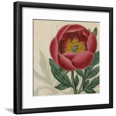 Floral Delight V-Vision Studio-Framed Art Print