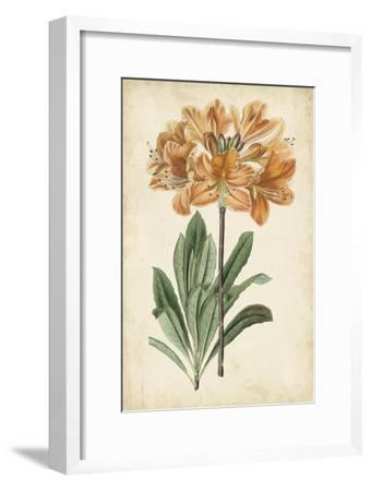 Botanical Display V-Vision Studio-Framed Art Print