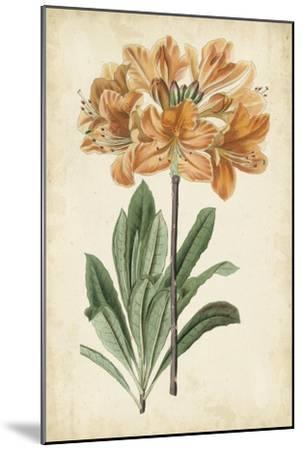 Botanical Display V-Vision Studio-Mounted Art Print