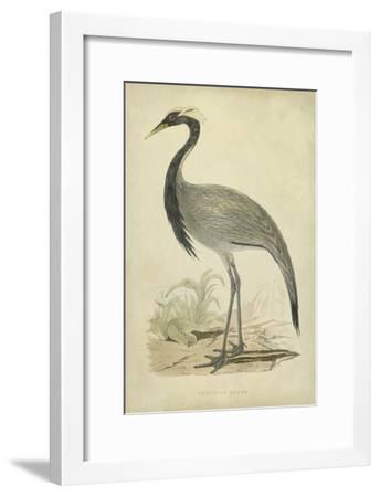Morris Crane II--Framed Art Print