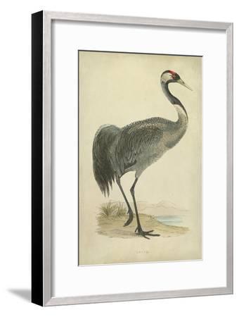 Morris Crane I--Framed Art Print