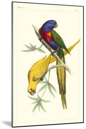 Lemaire Parrots IV-C.L. Lemaire-Mounted Art Print