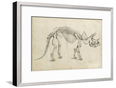 Dinosaur Study II-Ethan Harper-Framed Art Print