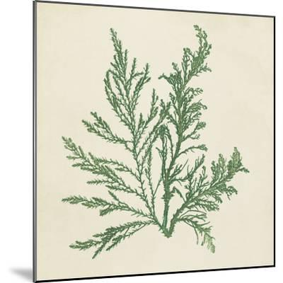 Chromatic Seaweed I-Vision Studio-Mounted Art Print