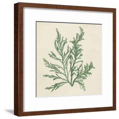 Chromatic Seaweed I-Vision Studio-Framed Art Print