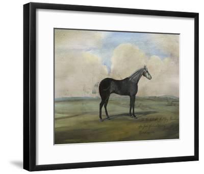 """""""The Kicker,"""" a Steel Grey Racehorse-Naomi McCavitt-Framed Art Print"""