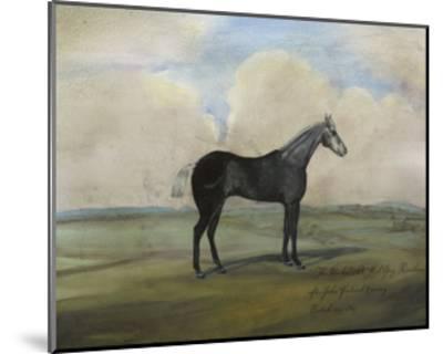 """""""The Kicker,"""" a Steel Grey Racehorse-Naomi McCavitt-Mounted Art Print"""