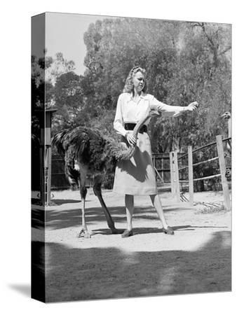 Woman Feeds Ostrich Orange on Farm-Philip Gendreau-Stretched Canvas Print