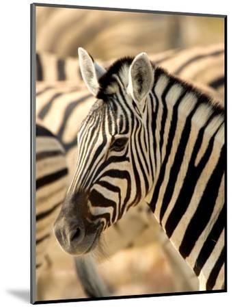 Zebra at Namutoni Resort, Namibia-Joe Restuccia III-Mounted Photographic Print