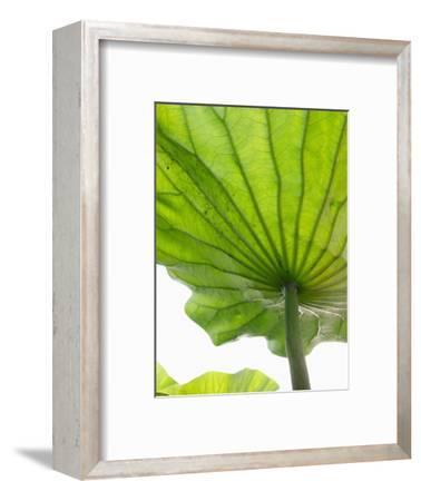 Lotus Leaf Texture-Michele Molinari-Framed Photographic Print