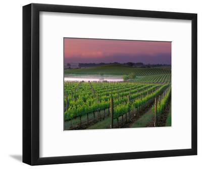 Sunrise in Distant Fog, Carnaros, Napa Valley, California, USA-Janis Miglavs-Framed Photographic Print