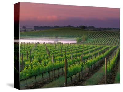 Sunrise in Distant Fog, Carnaros, Napa Valley, California, USA-Janis Miglavs-Stretched Canvas Print