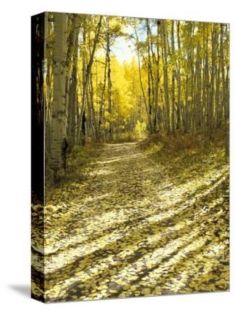 Aspen, Dirt Road, Kebler Pass, Colorado, USA-Darrell Gulin-Stretched Canvas Print