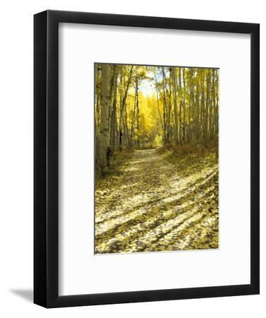 Aspen, Dirt Road, Kebler Pass, Colorado, USA-Darrell Gulin-Framed Photographic Print