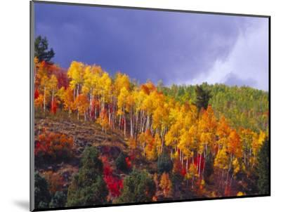 Colorful Aspens in Logan Canyon, Utah, USA-Julie Eggers-Mounted Photographic Print