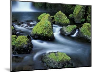 Water Below Wahclella Falls, Columbia River Gorge National Scenic Area, Oregon, USA-Adam Jones-Mounted Photographic Print