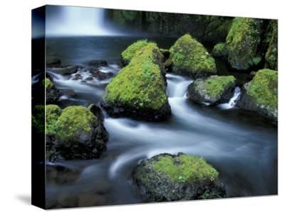 Water Below Wahclella Falls, Columbia River Gorge National Scenic Area, Oregon, USA-Adam Jones-Stretched Canvas Print