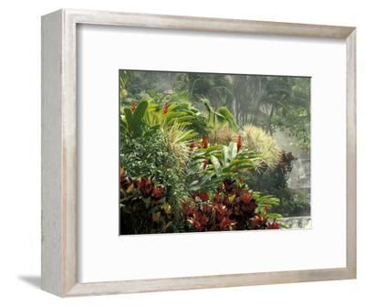 Woman at Tabacon Hot Springs near Arenal Volcano, Costa Rica-Stuart Westmoreland-Framed Photographic Print