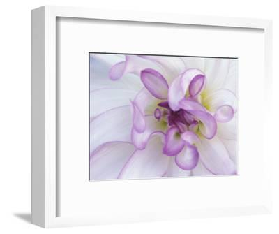 Purple Flower-Michele Westmorland-Framed Photographic Print