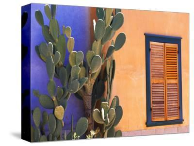 Southwestern Cactus and Window, Tucson, Arizona, USA-Tom Haseltine-Stretched Canvas Print
