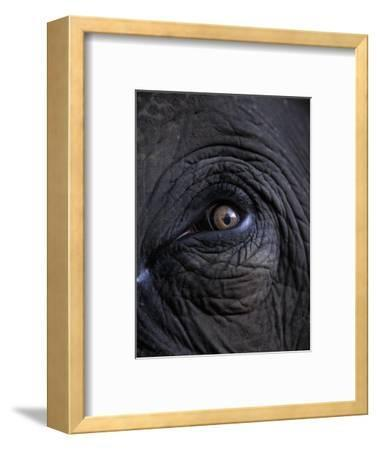 Elephant in Bandavgarh National Park, India-Theo Allofs-Framed Photographic Print