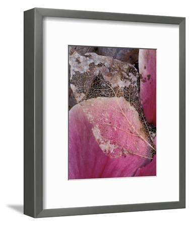 Dead Leaf, Seattle, Washington, USA-William Sutton-Framed Photographic Print