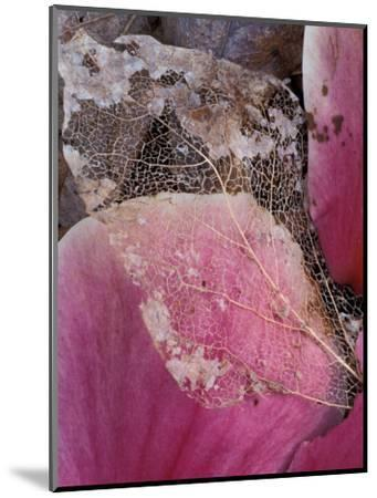 Dead Leaf, Seattle, Washington, USA-William Sutton-Mounted Photographic Print