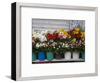Flower Market, Port Louis, Mauritius-Walter Bibikow-Framed Photographic Print