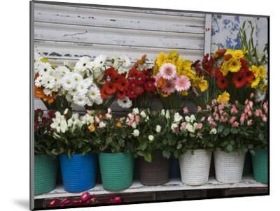 Flower Market, Port Louis, Mauritius-Walter Bibikow-Mounted Photographic Print