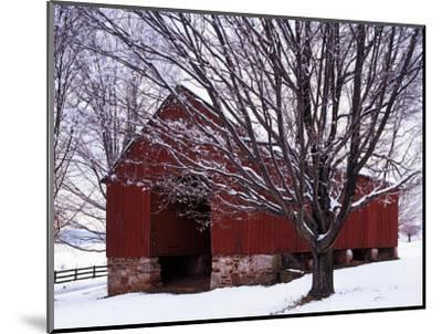 Barn and Maple after winter storm, Fairfax County, Virginia, USA-Charles Gurche-Mounted Premium Photographic Print