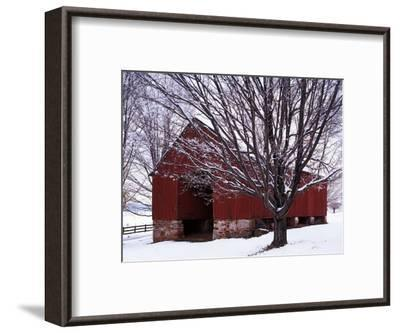 Barn and Maple after winter storm, Fairfax County, Virginia, USA-Charles Gurche-Framed Premium Photographic Print