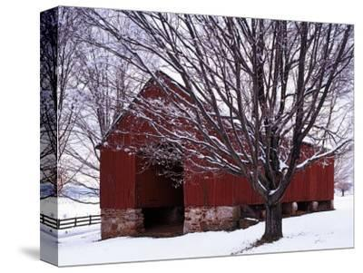 Barn and Maple after winter storm, Fairfax County, Virginia, USA-Charles Gurche-Stretched Canvas Print