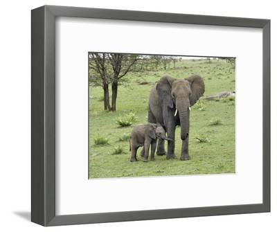 Female African Elephant with baby, Serengeti National Park, Tanzania-Adam Jones-Framed Photographic Print