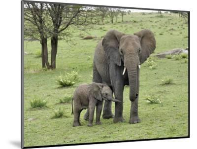 Female African Elephant with baby, Serengeti National Park, Tanzania-Adam Jones-Mounted Photographic Print