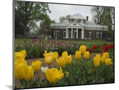 Tulips in Garden of Monticello, Virginia, USA-John & Lisa Merrill-Mounted Photographic Print