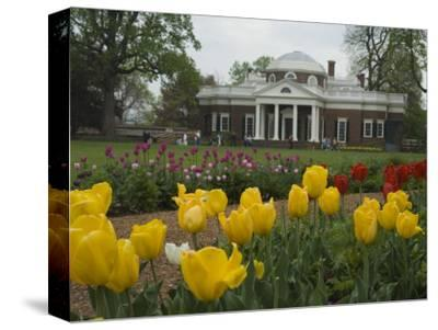 Tulips in Garden of Monticello, Virginia, USA-John & Lisa Merrill-Stretched Canvas Print