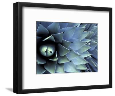 Pattern in Agave Cactus-Adam Jones-Framed Photographic Print
