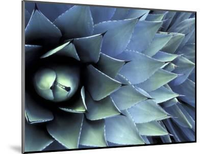 Pattern in Agave Cactus-Adam Jones-Mounted Photographic Print