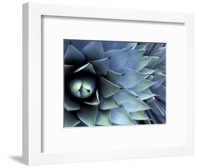 Pattern in Agave Cactus-Adam Jones-Framed Premium Photographic Print
