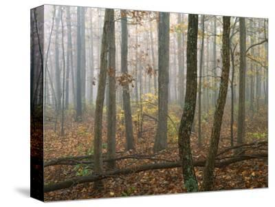 Autumn, Ozark-St. Francis National Forest, Arkansas, USA-Charles Gurche-Stretched Canvas Print