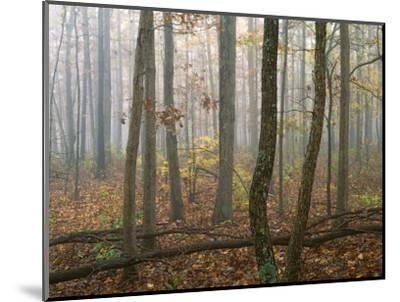 Autumn, Ozark-St. Francis National Forest, Arkansas, USA-Charles Gurche-Mounted Photographic Print