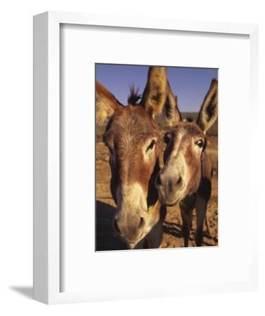 Burros, Cabo San Lucas, Baja California, Mexico-Douglas Peebles-Framed Photographic Print